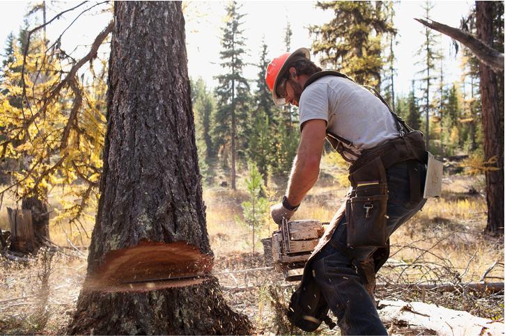 arborist costa mesa