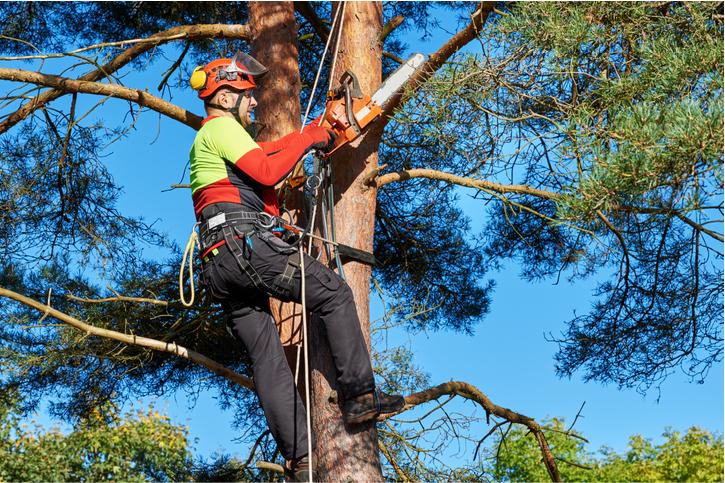 arborist in costa mesa ca