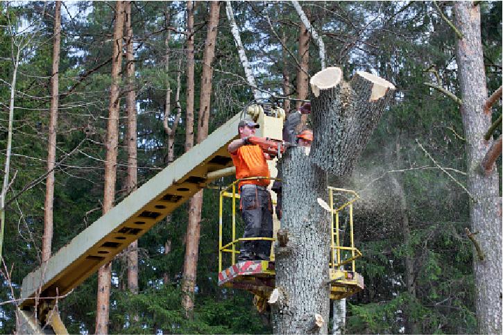 emergency tree service in costa mesa
