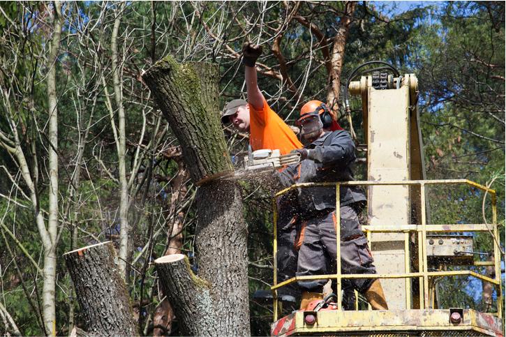 tree cabling in costa mesa ca