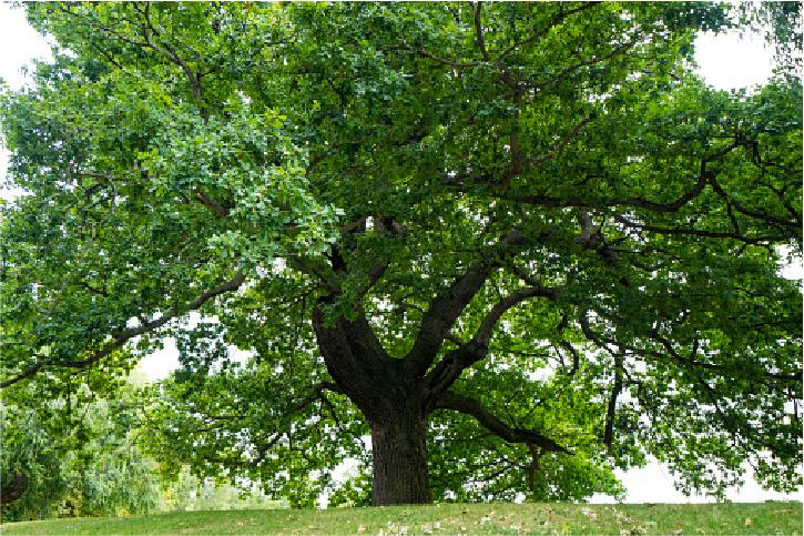 tree care costa mesa