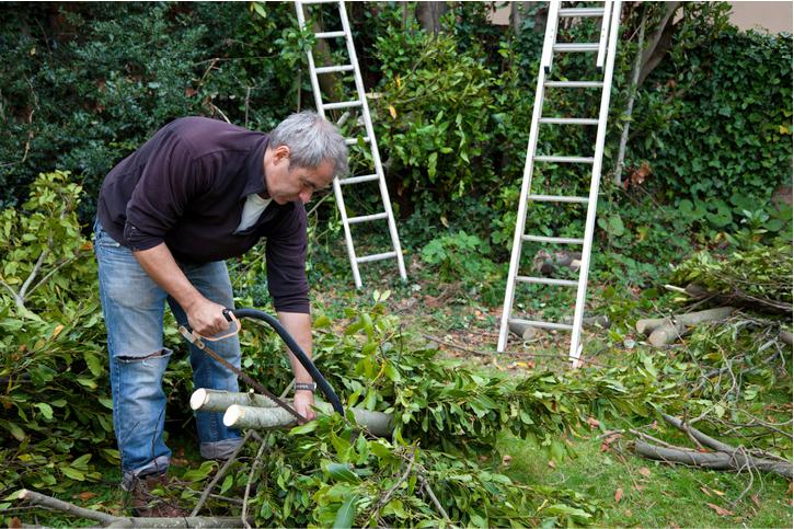 tree removal costa mesa ca