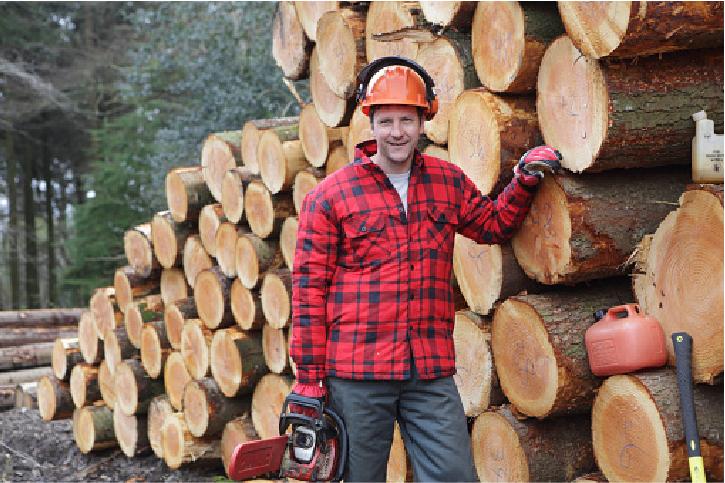 tree service costa mesa