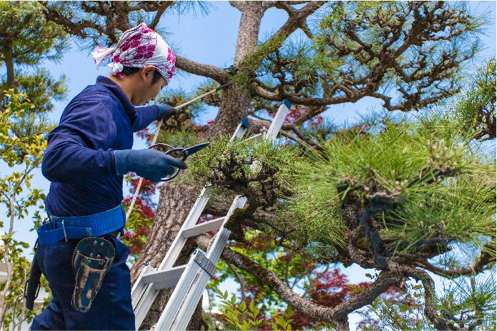 tree services in costa mesa ca