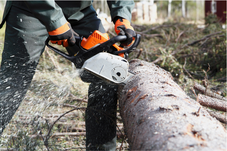 tree services in costa mesa