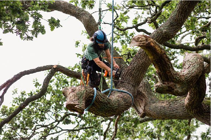 tree surgeon in costa mesa ca